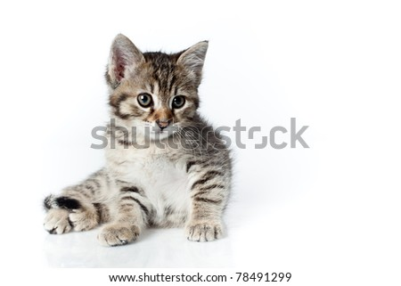 looking down little kitten on white background