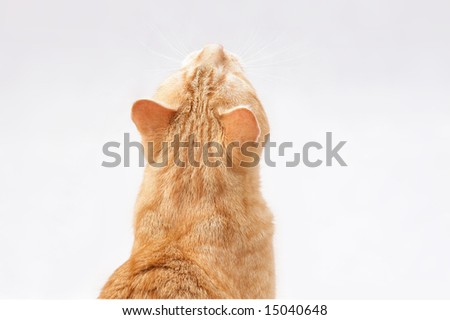 looking ginger cat - stock photo