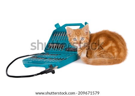 Looking ginger kitten sitting next to set of drill bits, isolated on white - stock photo