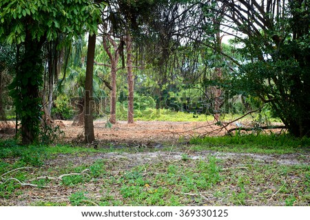 Looking into a subtropical wilderness scene in Bonita Springs, Florida. - stock photo