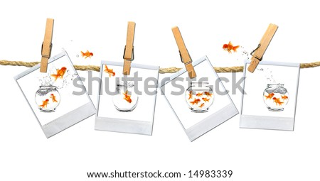 Looking or a Stable Place: Goldfish Escape - stock photo