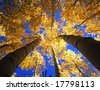 Looking up at a canopy of yellow leaves, formed by aspen trees in Colorado's Arapaho National Forest, photographed during the autumn season. - stock photo