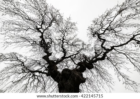 Looking up at a spooky looking tree. There are no leaves on the tree, it is bare. The tree appears to be reaching out over you and trying to grab or chase you. The sky is bright but cloudy. - stock photo