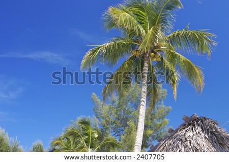 Looking up at the underneath of a palm tree in the tropics - stock photo