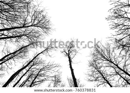 Looking up. Bare trees branches without leaves isolated on white background. Mystical atmosphere. Empty place for a text.