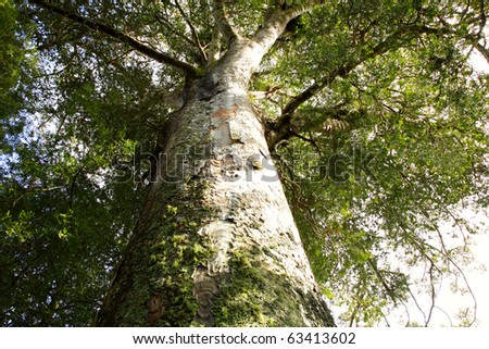 Looking up large tree in forest - stock photo