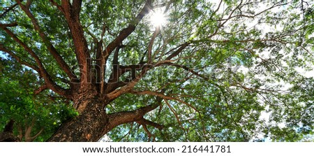 Looking up mighty tree, background - stock photo