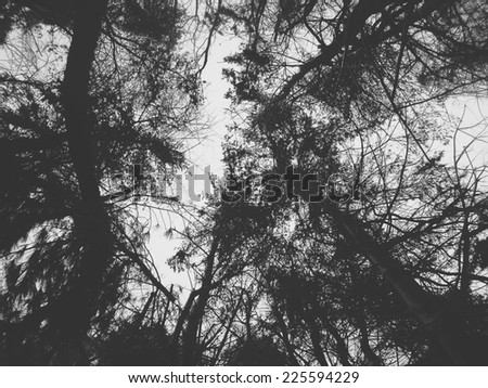 Looking up through the group of trees into the sky. - stock photo