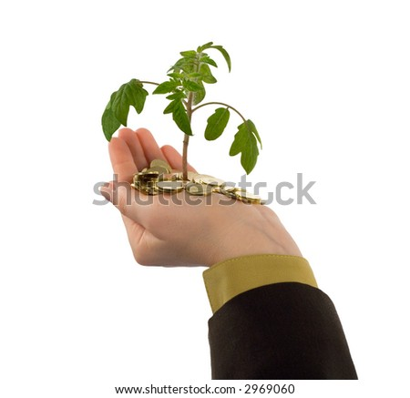 Looking up to a new plant sprouting from a handful of golden coins (isolated) - stock photo