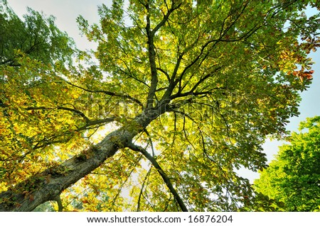 Looking up to see the colorful leaves, showing a hint of autumn. - stock photo