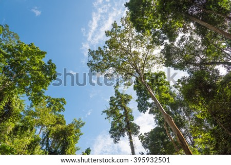 Looking up to the blue sky in forest through the trees. - stock photo