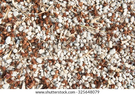 Loose gravel texture white with uneven natural mix of brown leaves and seeds, realistic aspect