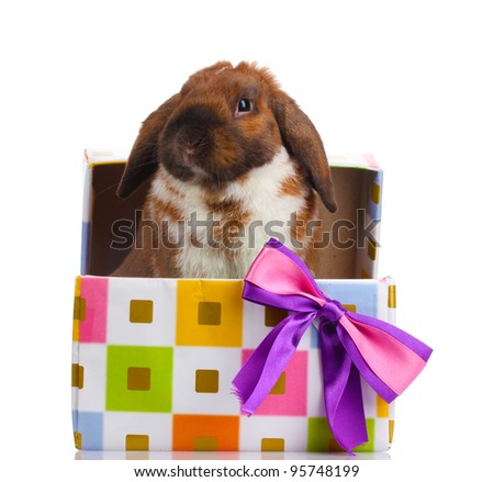 Lop-eared rabbit in a gift box with purple bow isolated on white - stock photo