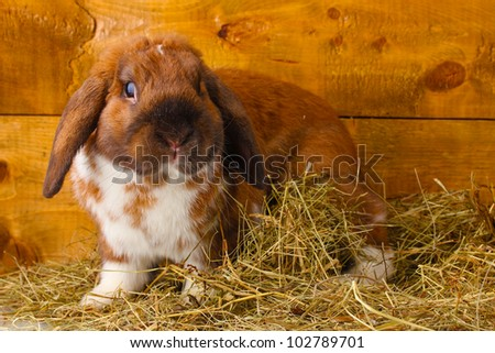 Lop-eared rabbit in a haystack on wooden background - stock photo
