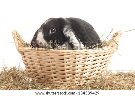 Lop-eared rabbit in a reed basket with straw isolated on white - stock photo