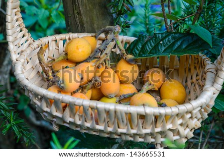 loquat in basket - stock photo