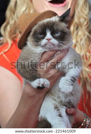 LOS ANGELES, CA - APRIL 13, 2014: Grumpy Cat at the 2014 MTV Movie Awards at the Nokia Theatre LA Live.  - stock photo