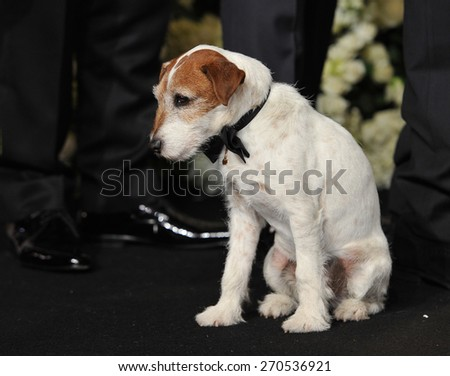 LOS ANGELES, CA - FEBRUARY 26, 2012: Uggie from The Artist at the 82nd Academy Awards at the Hollywood & Highland Theatre, Hollywood.  - stock photo