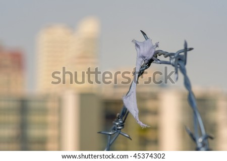 lost a peace of fabric on barbed wire - stock photo