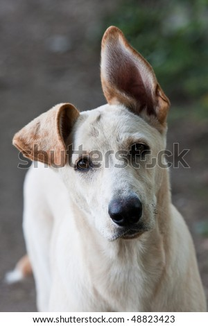 lost dog - bad day - stock photo