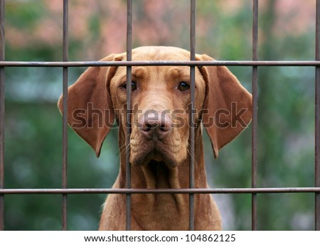 Lost dog behind a fence - stock photo