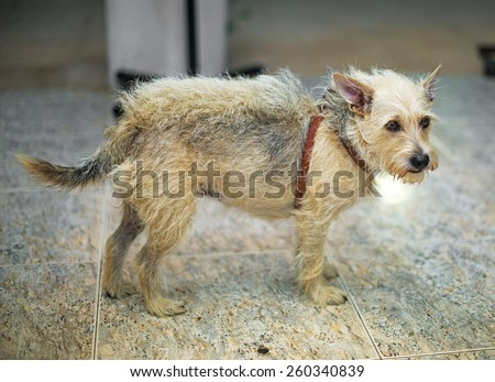 Lost dog indoors waiting for the owner. - stock photo