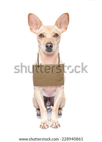 lost,homeless  dog with cardboard hanging around neck, isolated on white background - stock photo