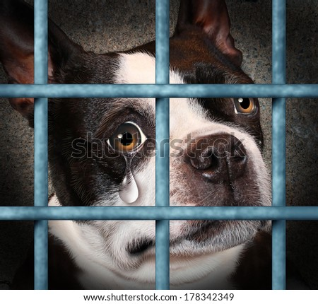 Lost pet animal cruelty and neglect concept with a sad crying dog in a dog pound prison cage looking at the viewer with a tear of despair as a concept for humane treatment of living things. - stock photo