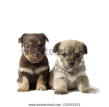 lost puppies isolated on white, no breed