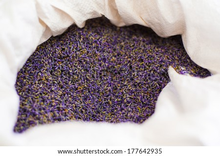 Lot of beautiful bright purple lavender flower petals in a large white cloth bag collected as  raw material for essential oils of lavender soaps and other products - stock photo