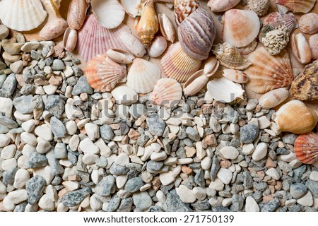 Lot of colorful seashells lying on stones at seashore - stock photo