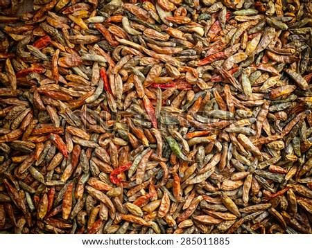 Lot of dried hot chili peppers in various colors. - stock photo