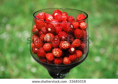 lot of red wild strawberry - stock photo