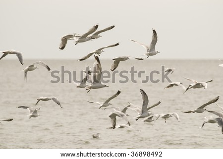 Lot of sea birds