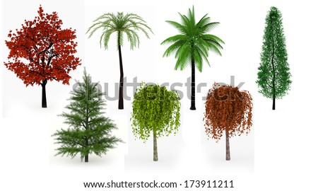 Lot of trees palms, leafy and coniferous isolated on white background - stock photo
