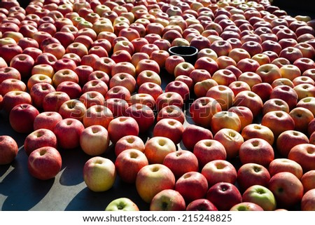 Lots of apples under industrial processing outdoors - stock photo