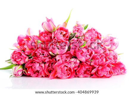 lots of beautiful pink tulips - flowers and plants - stock photo