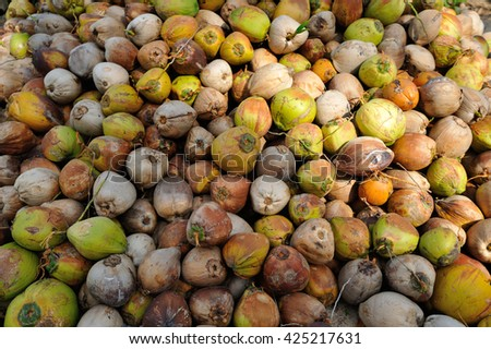 Lots of Coconuts with different multi-colored rind: green, yellow, brown, orange