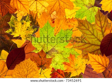 lots of colorful autumn leaves as a background texture - stock photo