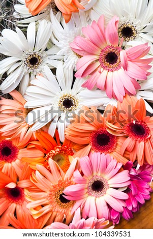 Lots of Colorful White, Red, Yellow and Pink Gerbera Flowers Background - stock photo