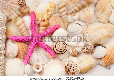 Lots of different seashells and scallops.