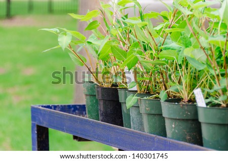 lots of flowers ready to planting in the spring garden. - stock photo