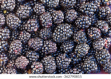Lots of fresh ripe blackberries close up - stock photo