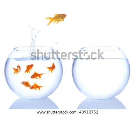 lots of goldfishes in a bowl and yellow goldfish jumping to a better place - stock photo