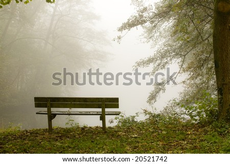 Lots of mist in a dutch forest - stock photo