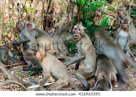 Lots of monkeys panicked stampede Jumping and movement in the forest