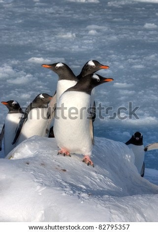 Lots of penguins standing on rocks - stock photo