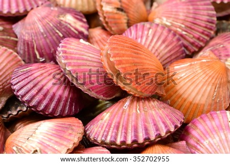 lots of scallop sea shells piled together background
