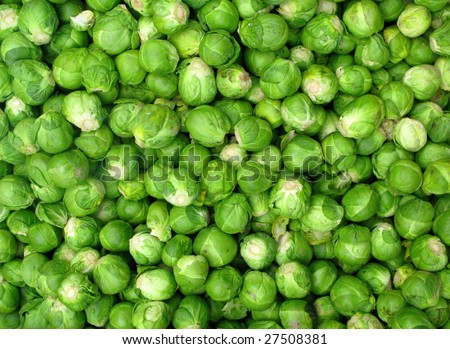Lots of small green Brussel sprout vegetables. - stock photo