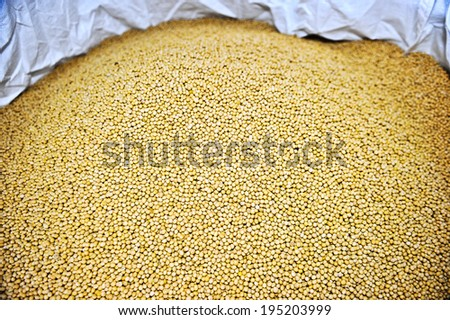 Lots of soybean background - stock photo